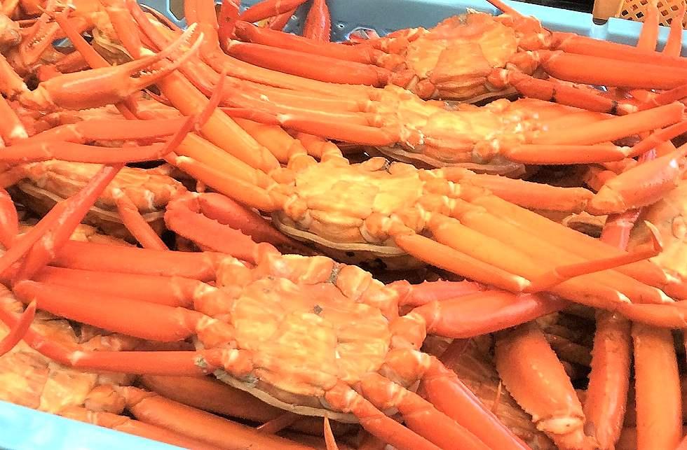 日本海でとれた紅ズワイ蟹